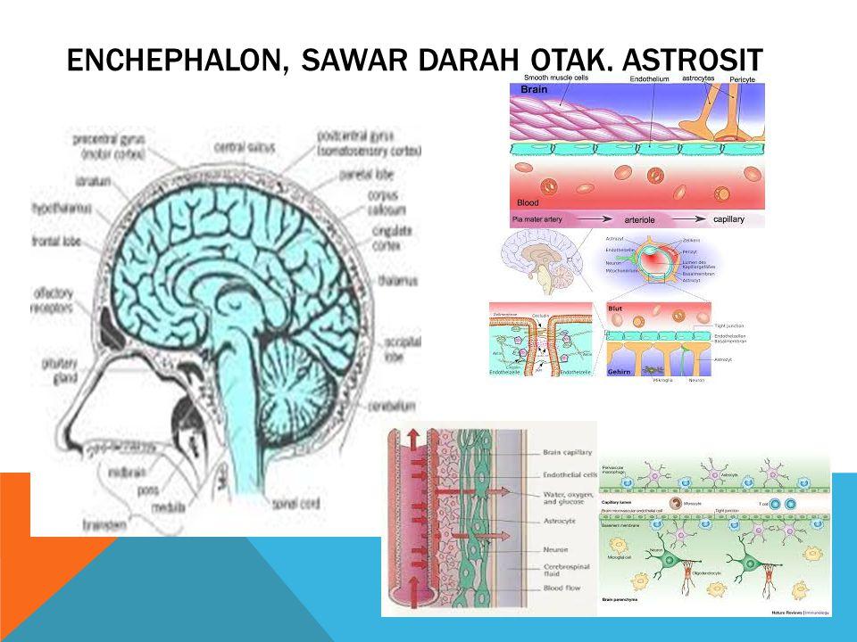Enchephalon, sawar darah otak, astrosit