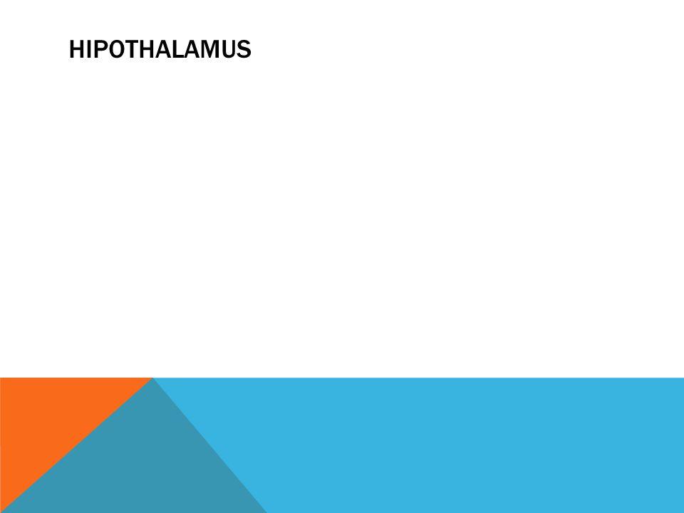 HIPOTHALAMUS