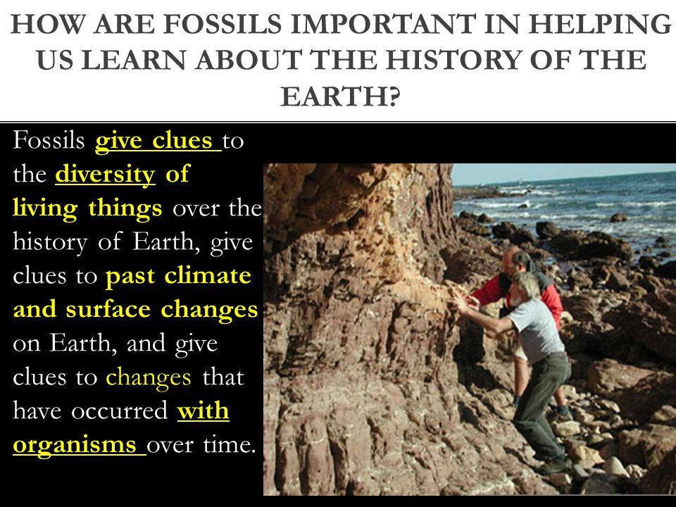How are fossils important in helping us learn about the history of the earth
