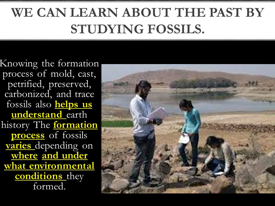 We can learn about the past by studying fossils.