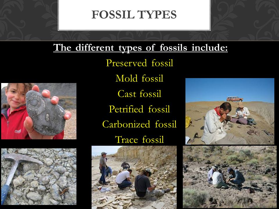 The different types of fossils include: