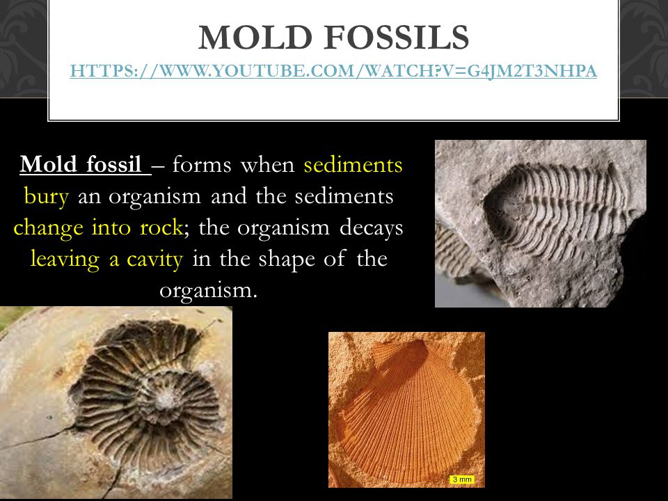 Mold fossils https://www.youtube.com/watch v=G4jM2t3NHPA
