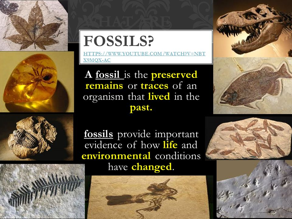 What are fossils https://www.youtube.com/watch v=Nbt x9MQx-ac