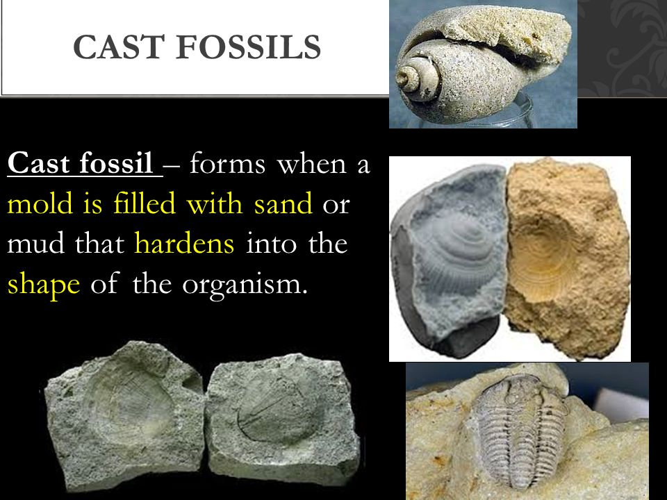 Cast fossils Cast fossil – forms when a mold is filled with sand or mud that hardens into the shape of the organism.