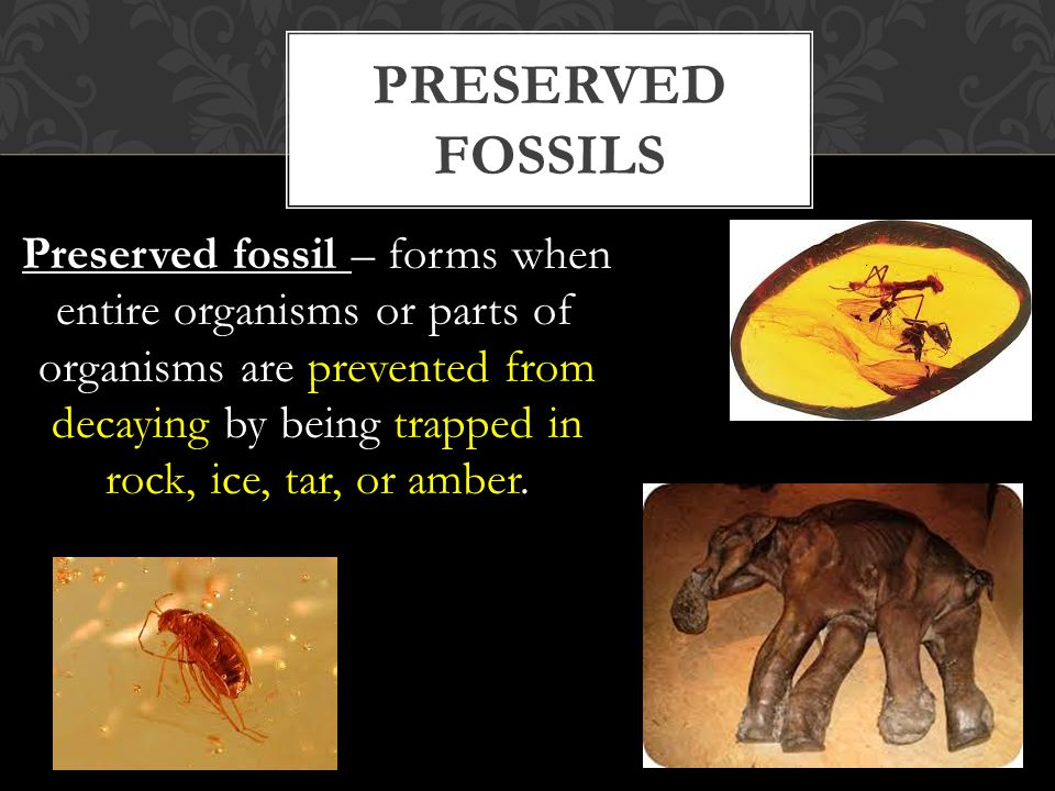 Preserved fossils