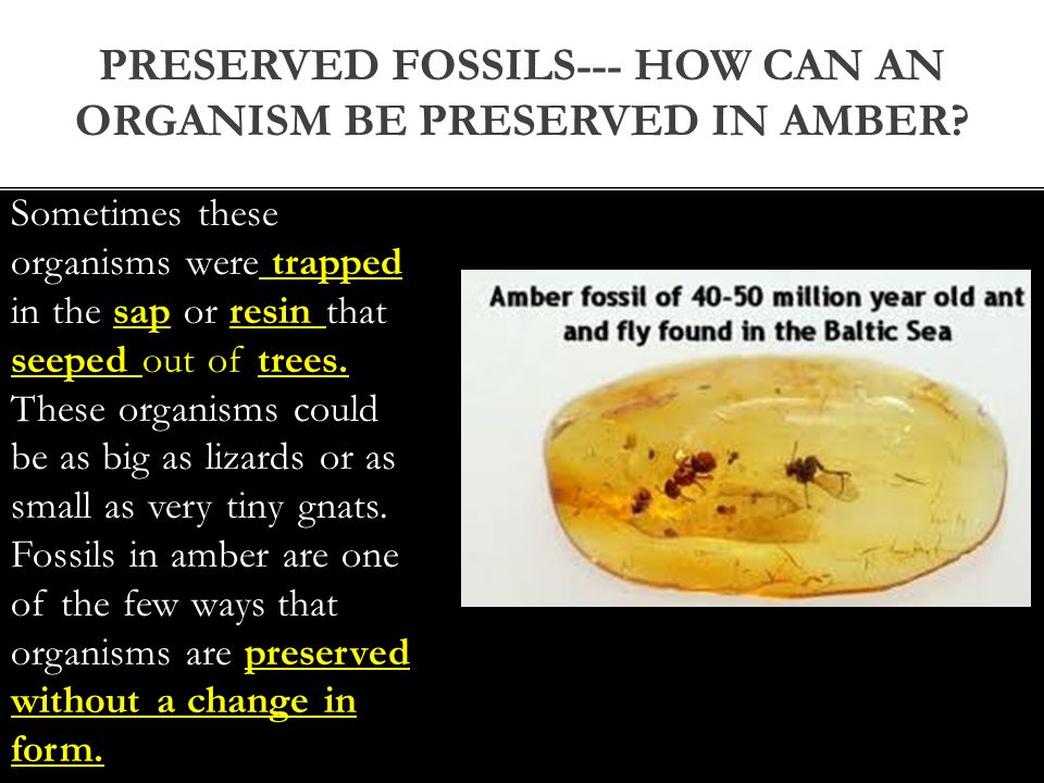 Preserved fossils--- How can an organism be preserved in amber