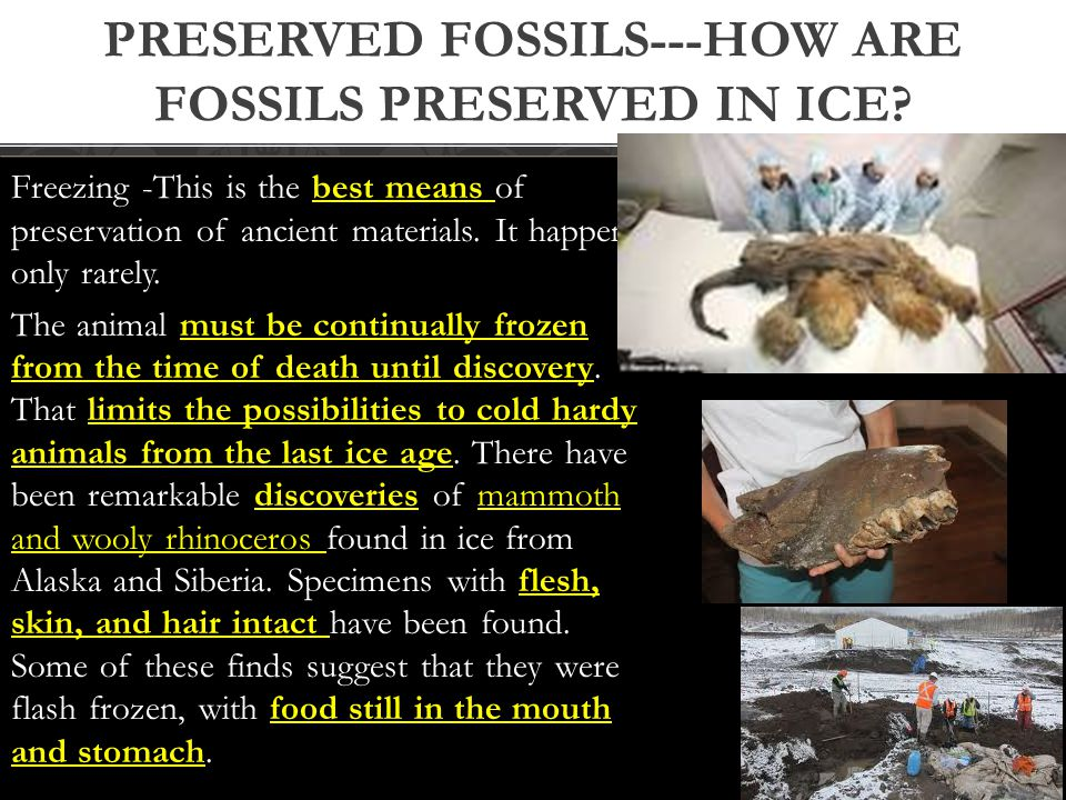 Preserved fossils---How are fossils preserved in ice