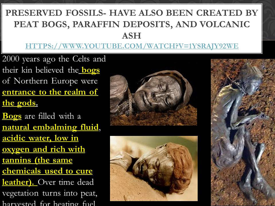 Preserved fossils- have also been created by peat bogs, paraffin deposits, and volcanic ash https://www.youtube.com/watch v=1ySRAJY92wE