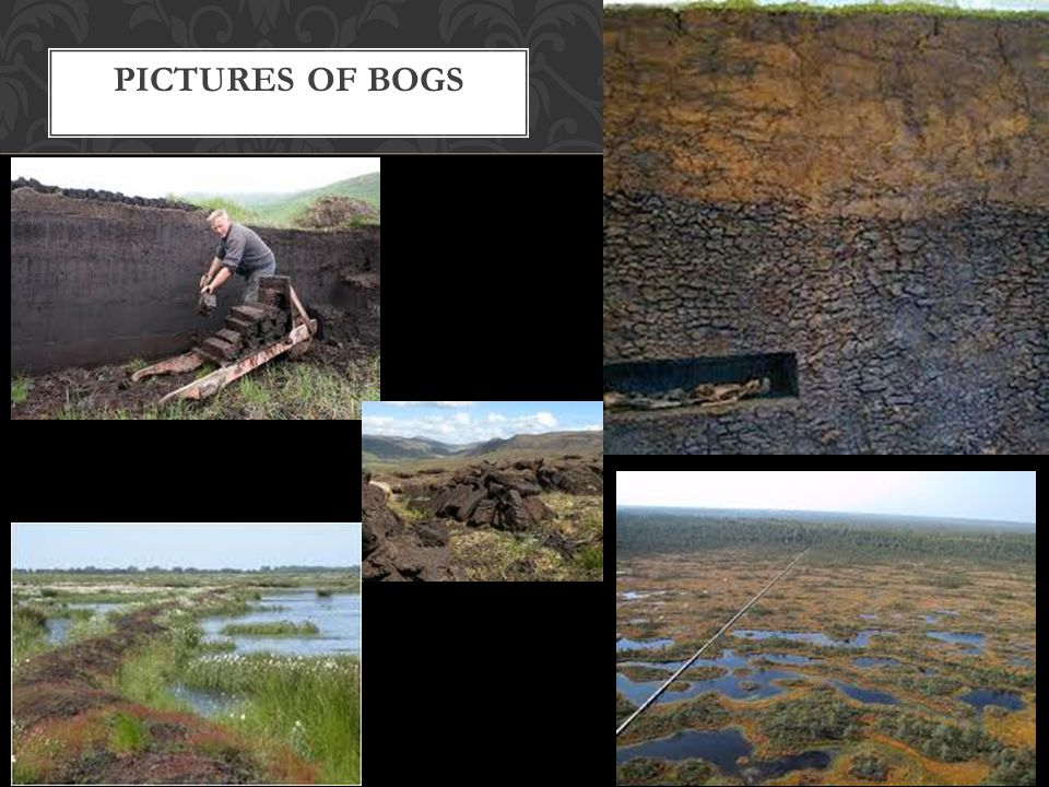 Pictures of Bogs