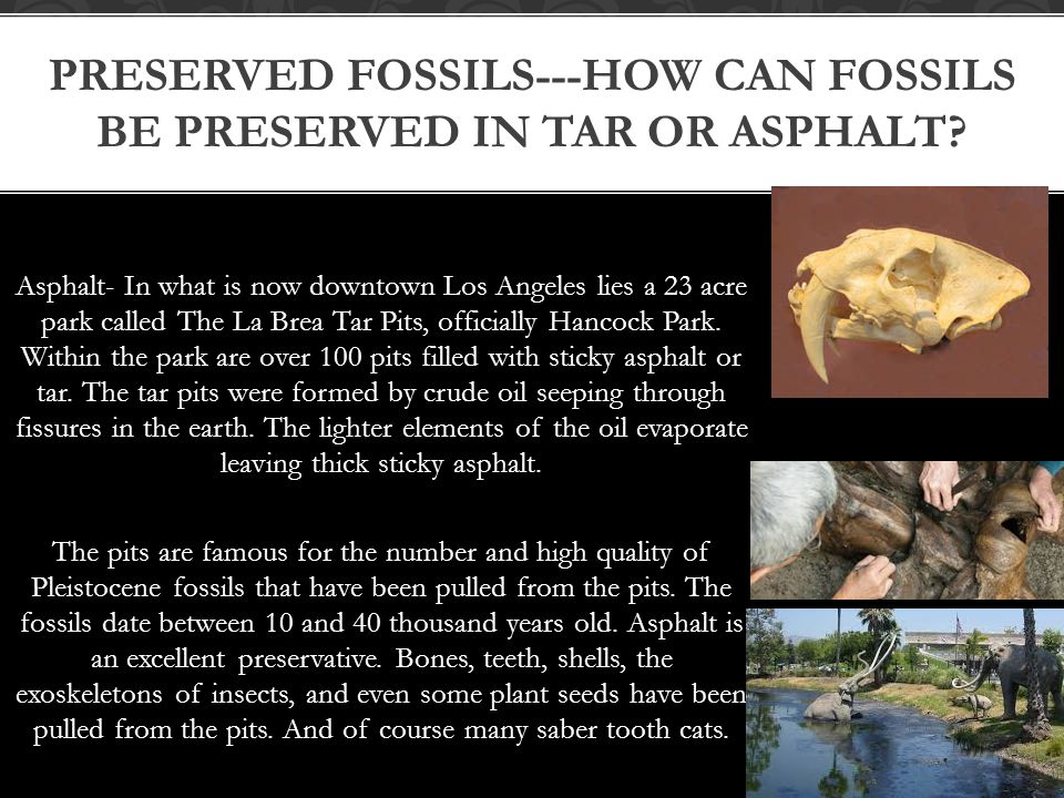 Preserved fossils---How can fossils be preserved in tar or asphalt