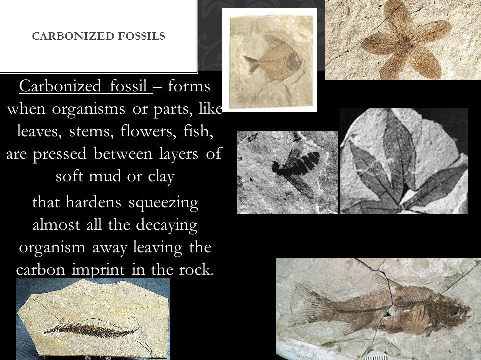 Carbonized fossils