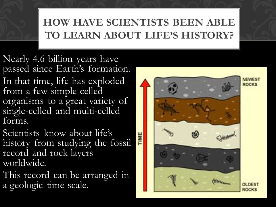 How have Scientists been able to learn about life's history