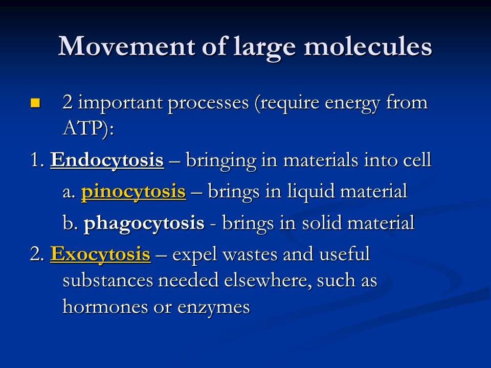 Movement of large molecules