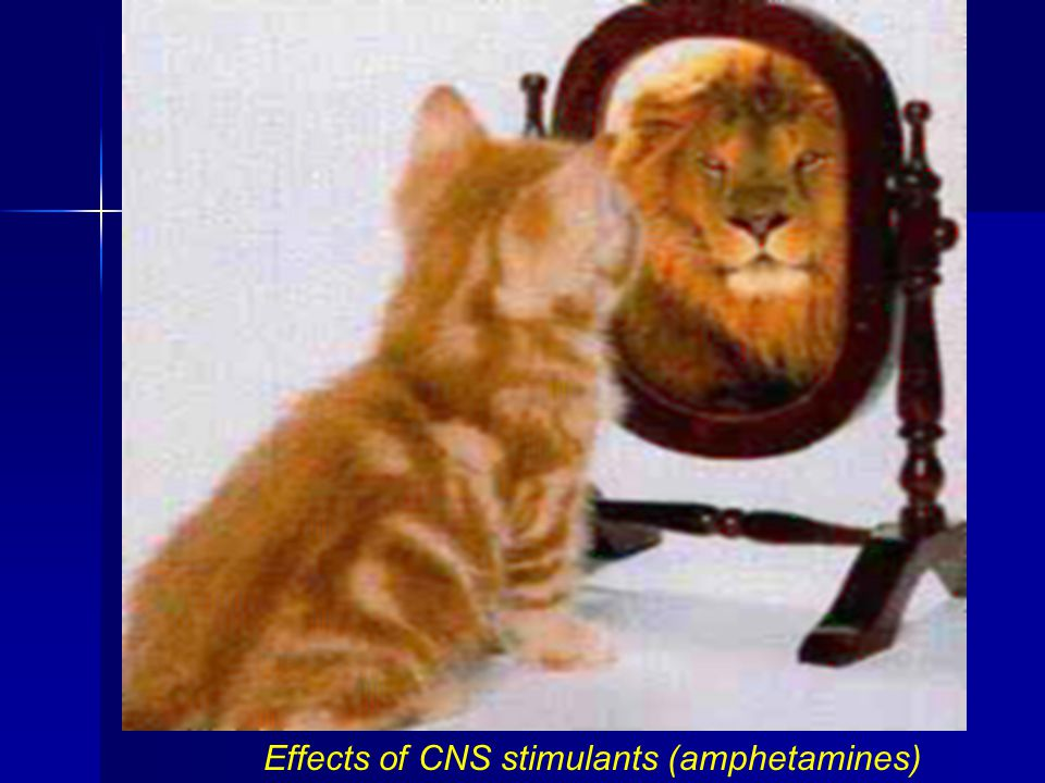 Effects of CNS stimulants (amphetamines)