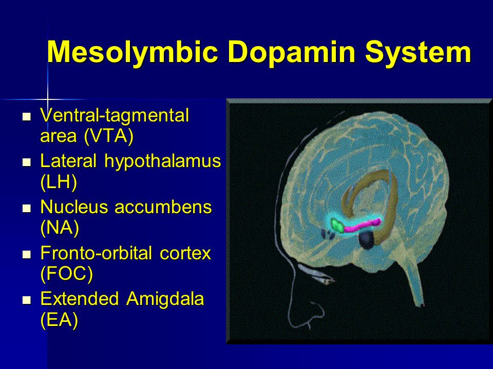 Mesolymbic Dopamin System