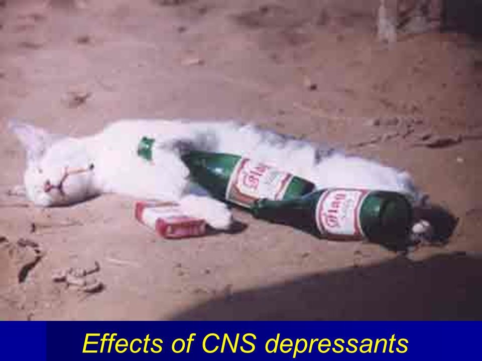 Effects of CNS depressants