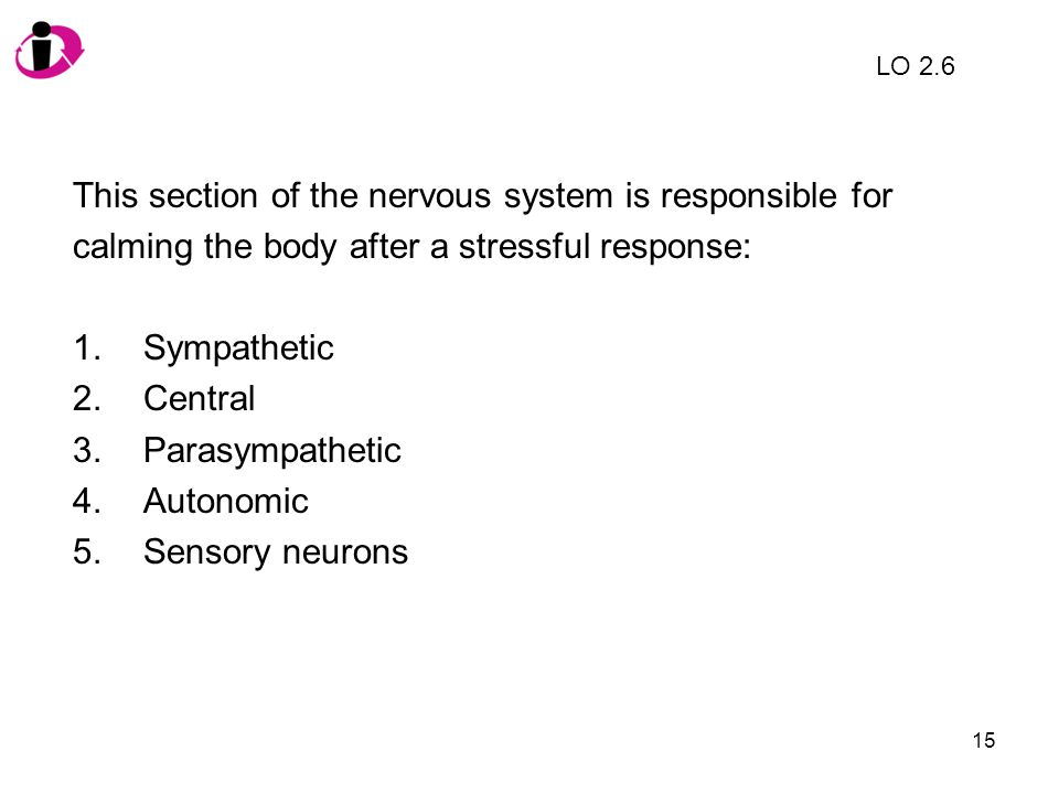 This section of the nervous system is responsible for