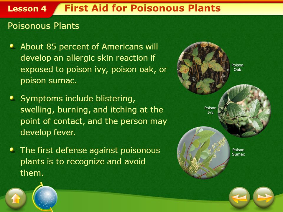 First Aid for Poisonous Plants