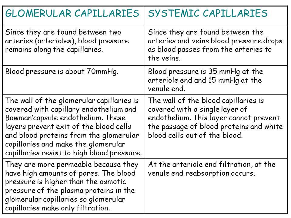 GLOMERULAR CAPILLARIES SYSTEMIC CAPILLARIES