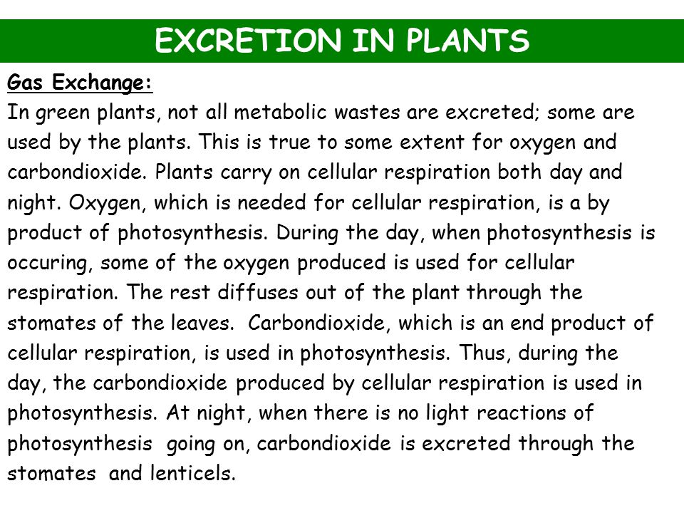 EXCRETION IN PLANTS Gas Exchange:
