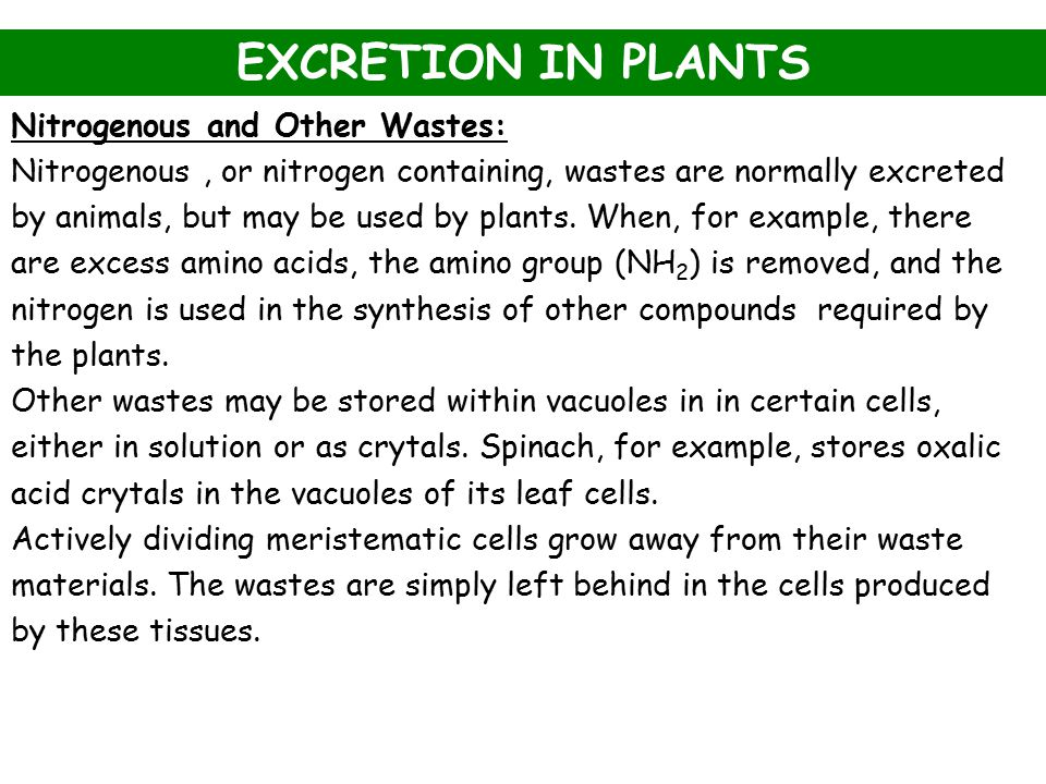 EXCRETION IN PLANTS Nitrogenous and Other Wastes: