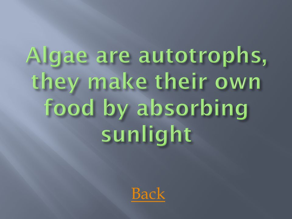 Algae are autotrophs, they make their own food by absorbing sunlight