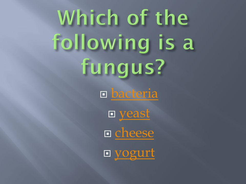 Which of the following is a fungus