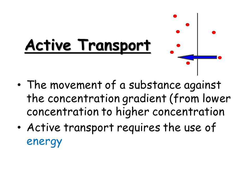 Active Transport The movement of a substance against the concentration gradient (from lower concentration to higher concentration.