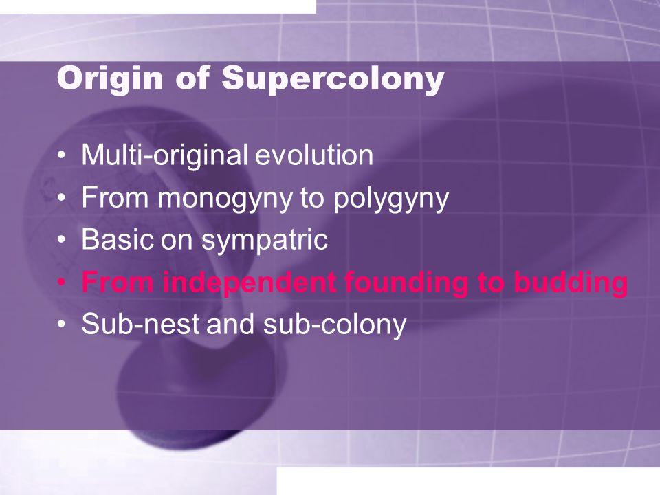 Origin of Supercolony Multi-original evolution