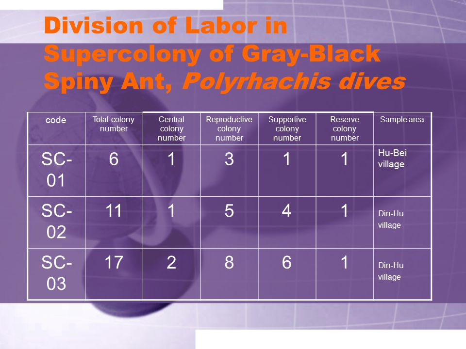 Division of Labor in Supercolony of Gray-Black Spiny Ant, Polyrhachis dives
