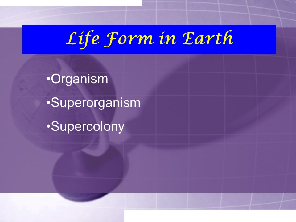 Life Form in Earth Organism Superorganism Supercolony