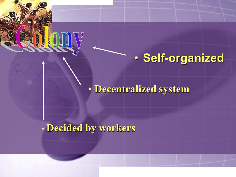 Colony Self-organized Decentralized system Decided by workers