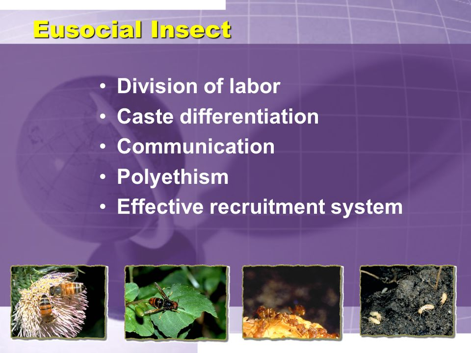 Eusocial Insect Division of labor Caste differentiation Communication