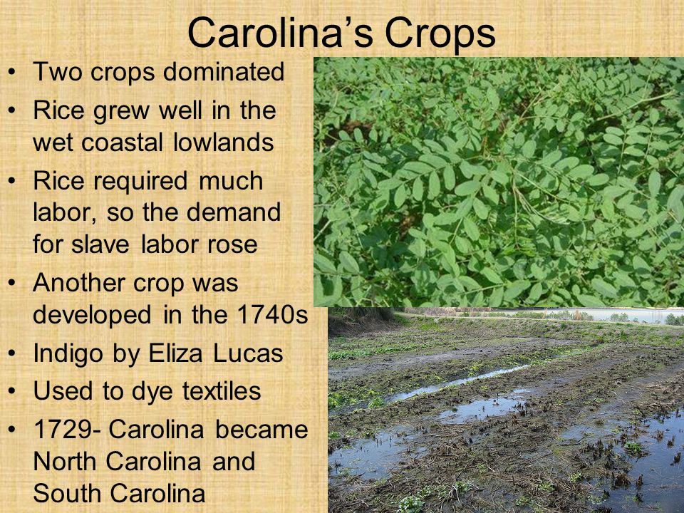 Carolina's Crops Two crops dominated
