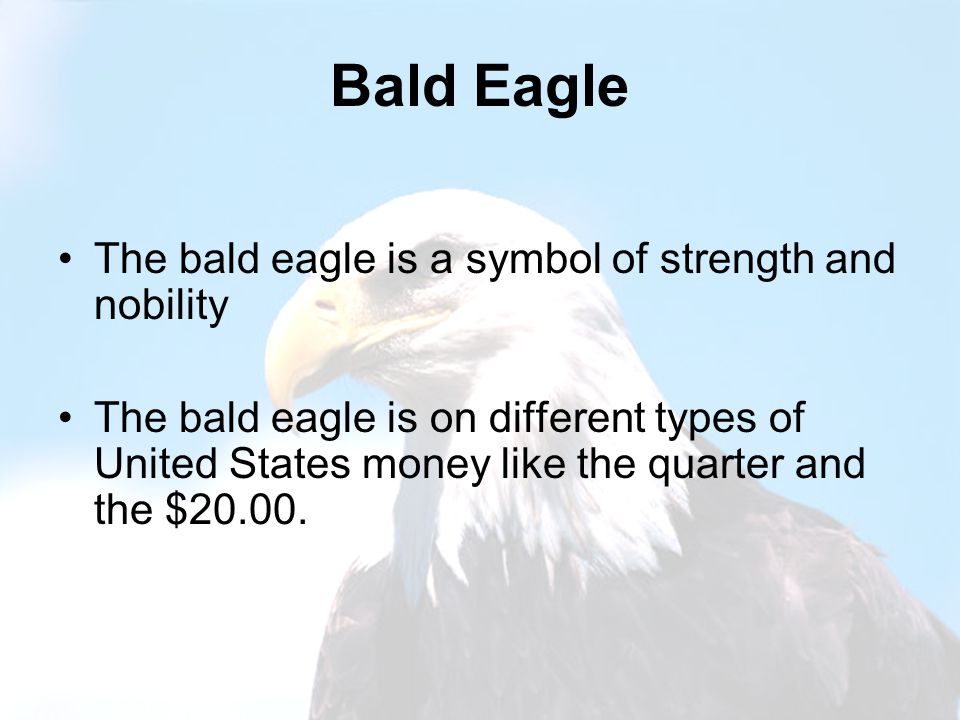 Bald Eagle The bald eagle is a symbol of strength and nobility