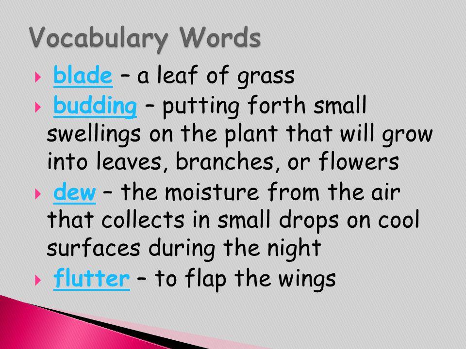 Vocabulary Words blade – a leaf of grass