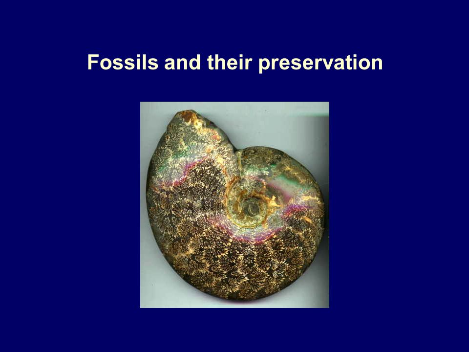 Fossils and their preservation