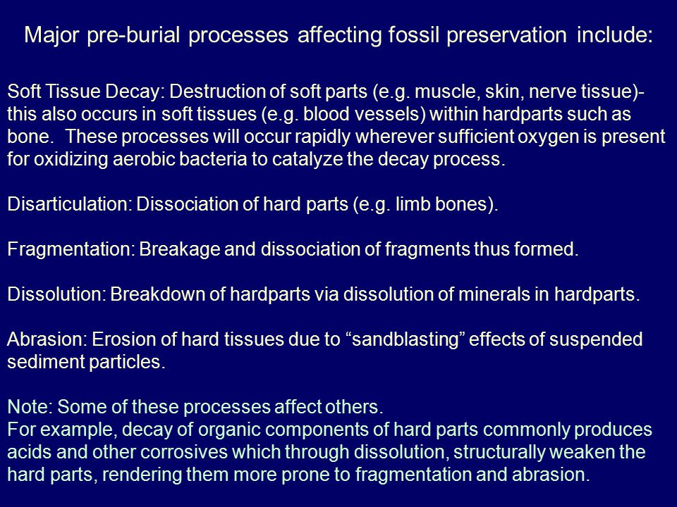 Major pre-burial processes affecting fossil preservation include: