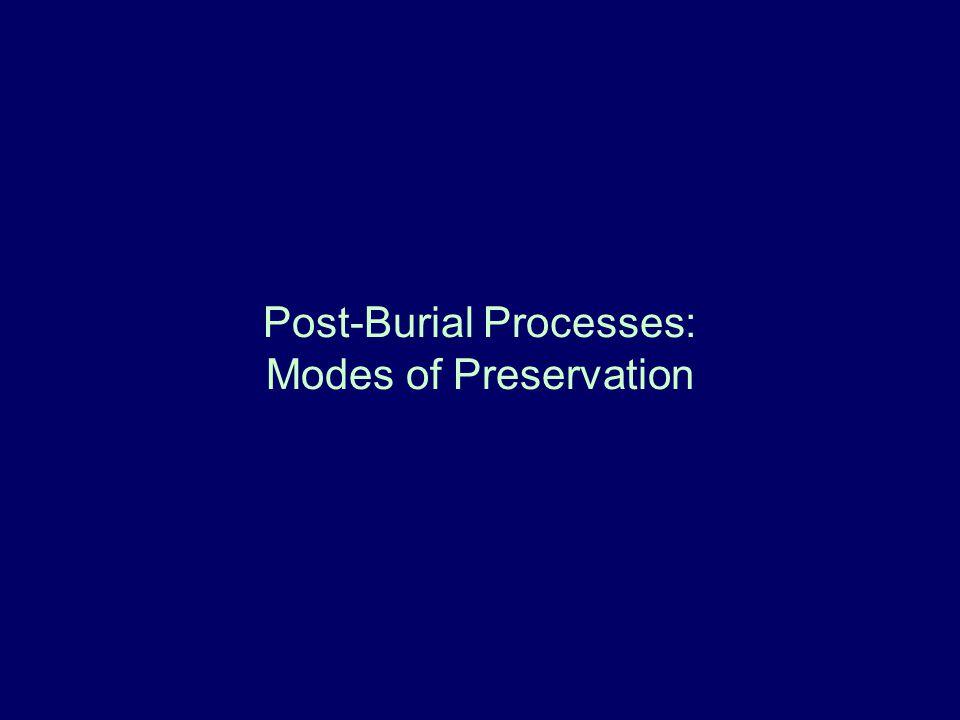 Post-Burial Processes: