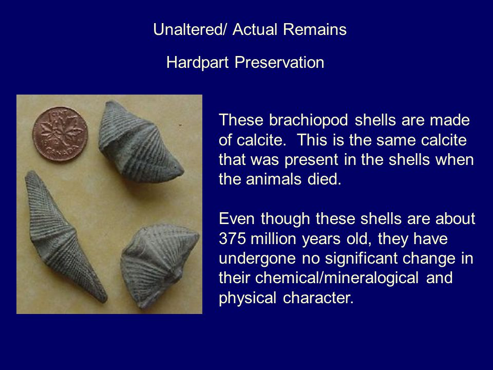 Unaltered/ Actual Remains