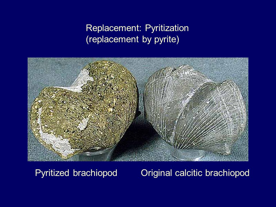 Replacement: Pyritization