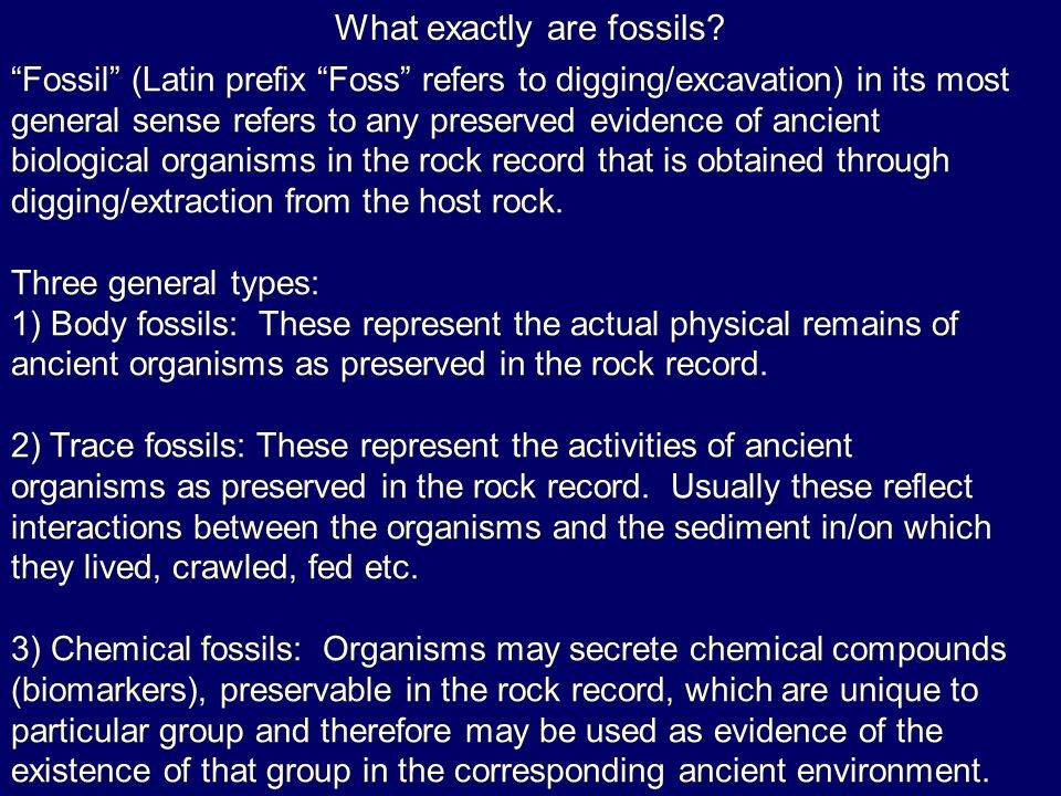 What exactly are fossils