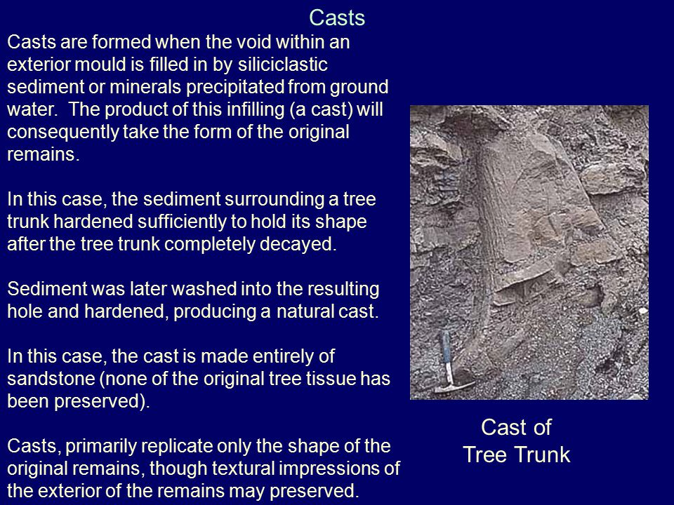 Casts Cast of Tree Trunk