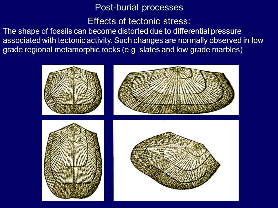 Post-burial processes
