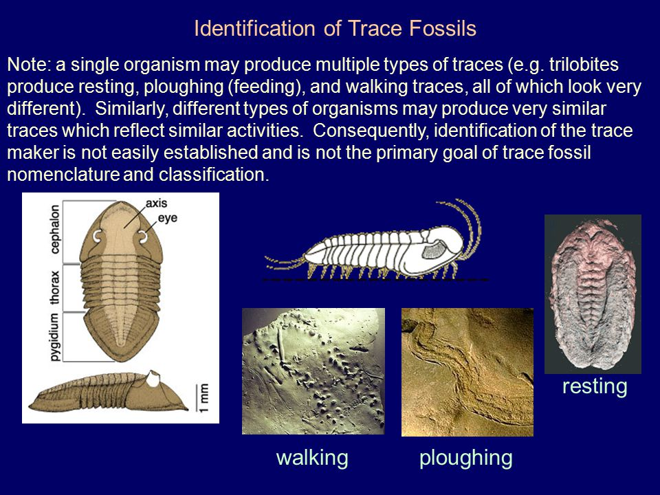 Identification of Trace Fossils