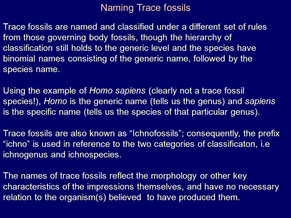Naming Trace fossils