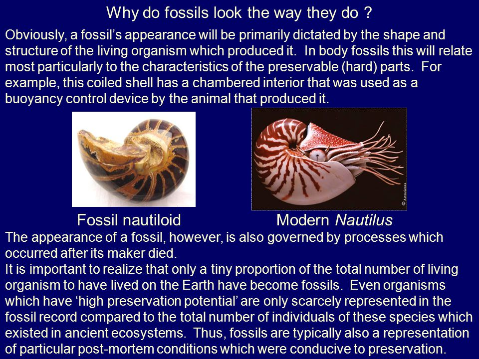 Why do fossils look the way they do