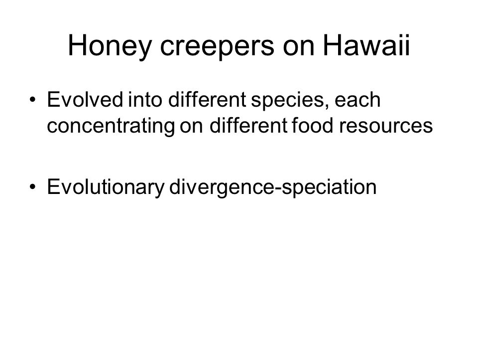 Honey creepers on Hawaii
