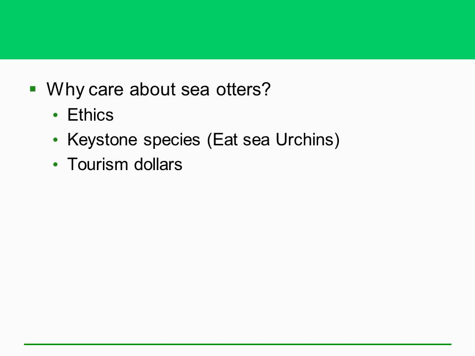 Why care about sea otters