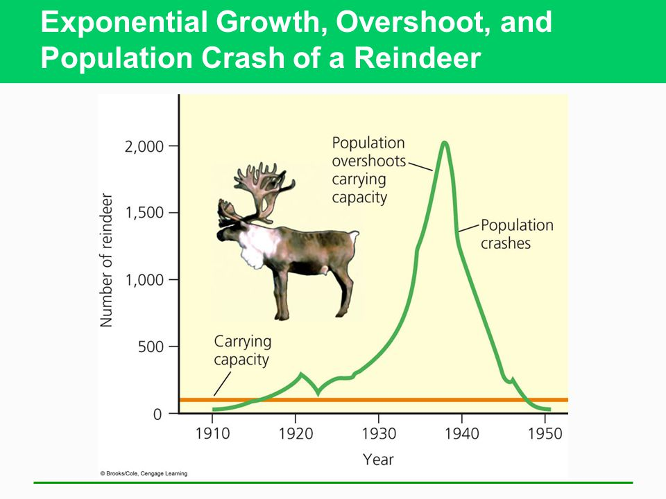 Exponential Growth, Overshoot, and Population Crash of a Reindeer